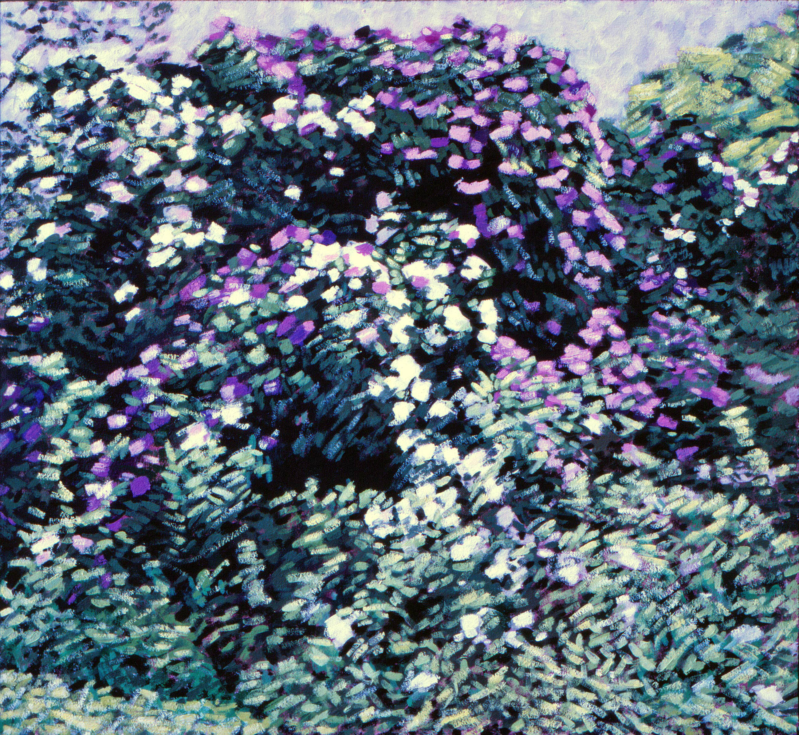 Rododendron 3 1980 50x60cm *